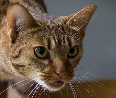 cat 11 a